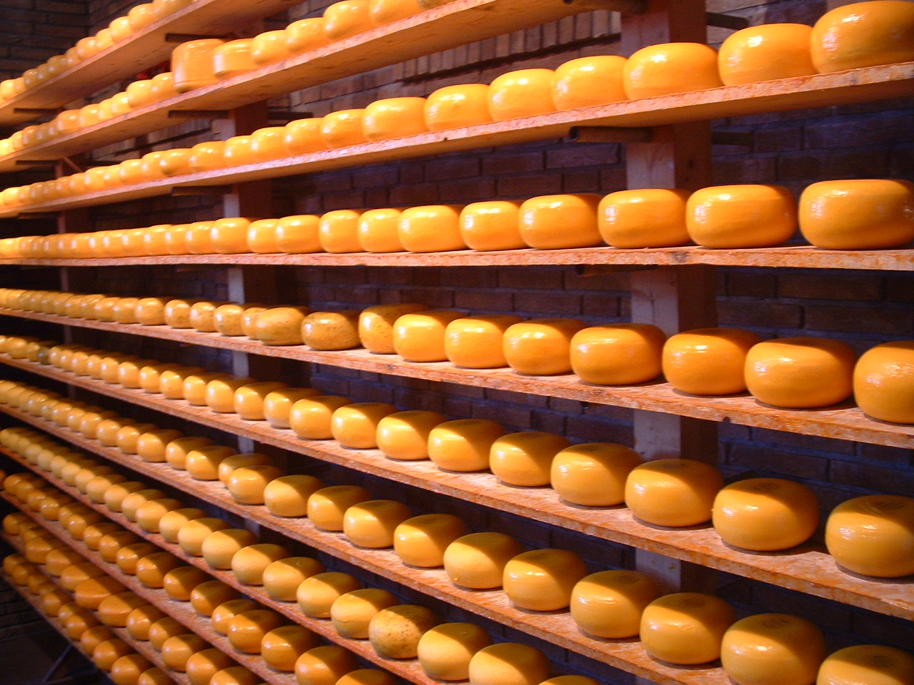 Shelves with gouda cheese, Photo: Kevin Connors