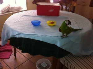 IKEA Fleece Blanket on Parrot Feeding Table