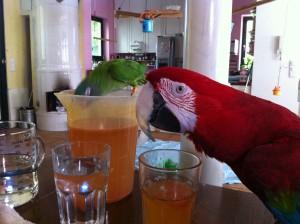 Photo: Ann Castro Yummy, yummy lemonade ...