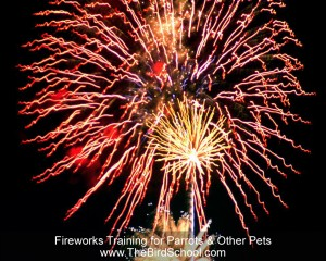 Fireworks Training for Parrots and Other Pets