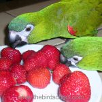 Help! My parrot is a picky eater