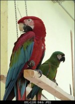 Musical Chairs With Parrots