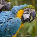Parrot Problems - Anti-Screaming Training: Don't wait, until it's too late!