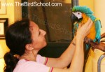 Parrot Rescue |  Carlo's Song | One Macaw's Story
